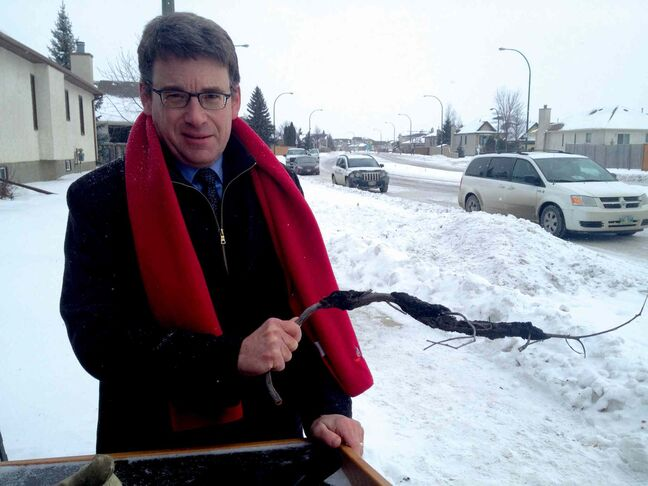 Coun. Brian Mayes (St. Vital) pictured holding a damaged Schubert chokecherry tree branch. The city will invest $1 million from the 2014 budget to help protect Winnipeg's tree canopy.