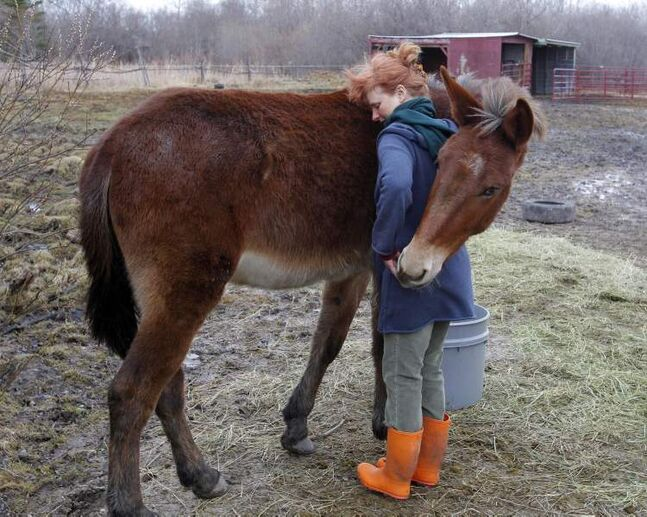 A quiet moment between Karin Schlaikjar and Molly the Mule March 29 shows a genuinely trusting and caring relationship between owner and animal. (Boris Minkevich/Winnipeg Free Press)