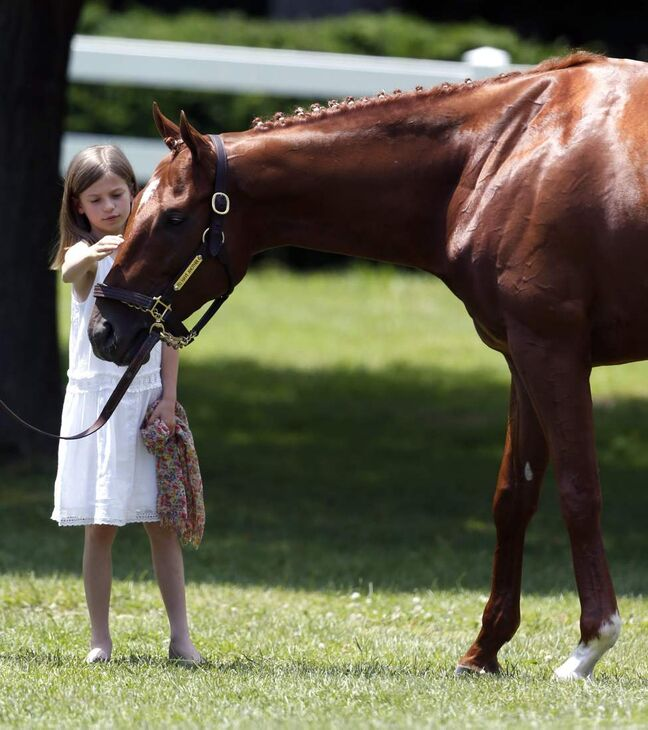 Kaylin Dixie O'Neill, daughter of trainer Doug O'Neill, pets Kentucky Derby and Preakness winner I'll Have Another during a news conference at Belmont Park in Elmont, N.Y., on Friday, June 8, 2012. I'll Have Another's bid for a Triple Crown ended with the shocking news that the colt was out of the Belmont Stakes due to a swollen left front tendon. The Belmont Stakes horse race is Saturday.