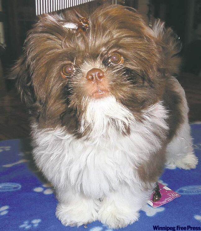 Though he many look like a Furby toy, Kenny is a handsome Shih Tzu who joined our family in September and quickly became the most loved dog on the planet. — The Zaharas, East St. Paul