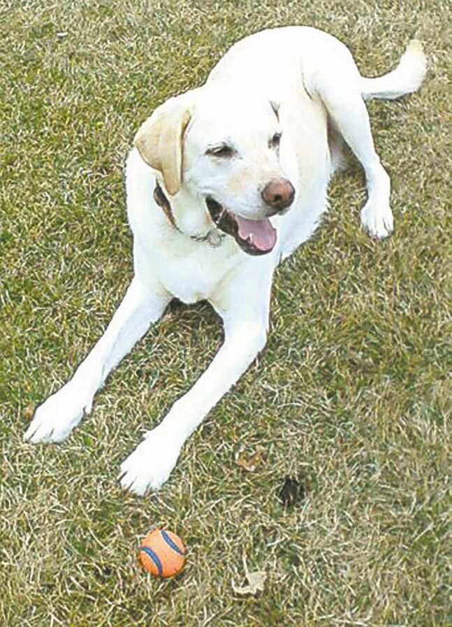Bart was rescued from an unkind, neglectful owner when he was just a puppy. When we adopted him at six months he weighed 61 pounds. He now weighs 122 lbs. and is proud to be a St. John's Ambulance therapy dog who regularly visits a nearby retirement home. — Mary Jane Smith, Winnipeg
