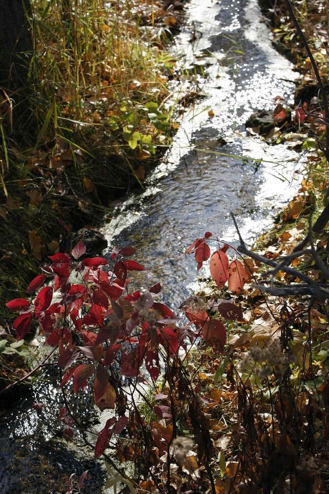 Sun reflects off a stream as the leaves change colour.