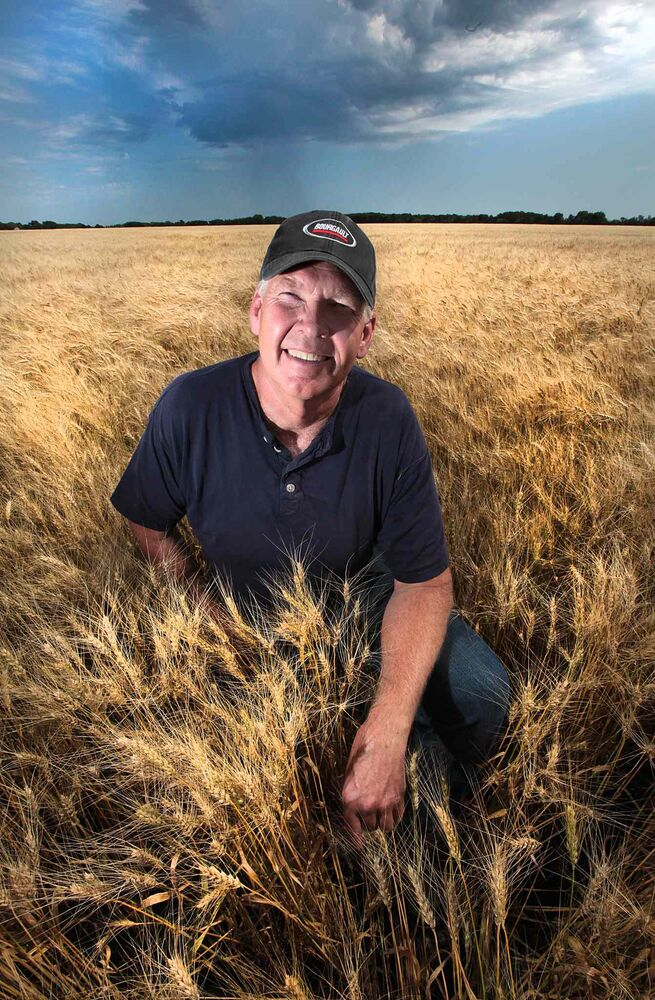 East Selkirk area farmer Doug Martin shows off a spectacular field of winter wheat on his farm. August 3, 2016 -