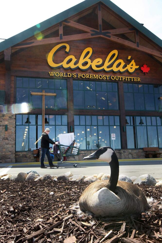 This Canada goose was brave setting up her nest at the front door of Cabela�s new 72,000-square-foot building that opened in Winnipeg Thursday, May 09, 2013.   (JOE BRYKSA / WINNIPEG FREE PRESS)