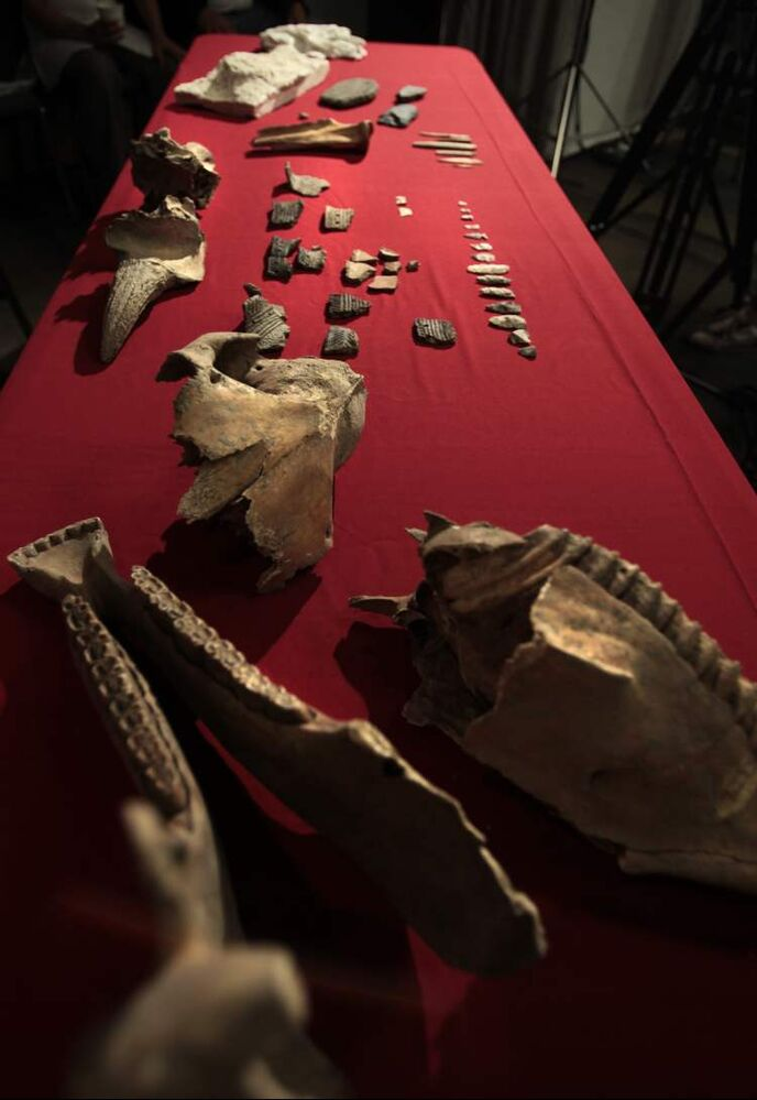 Jaw bones and a skull from a horse can be seen in the foreground. Pieces of pottery, arrowheads and bison horns are among the other items displayed in the background.