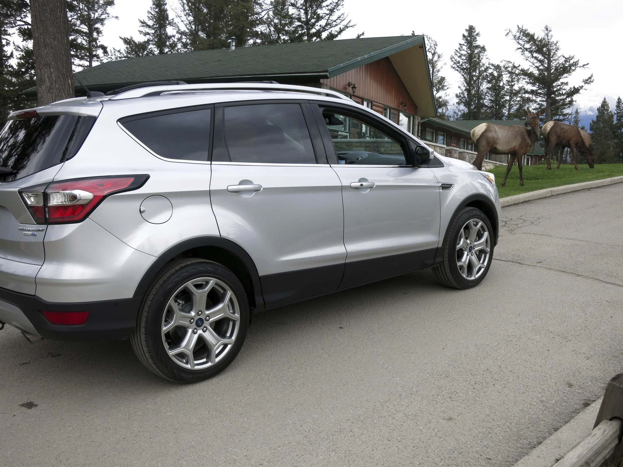 KELLY TAYLOR / WINNIPEG FREE PRESSElk munching on green grass near Jasper aren't the least bit interested in the 2017 Ford Escape, but reviewer Kelly Taylor thinks the new model is a winner.