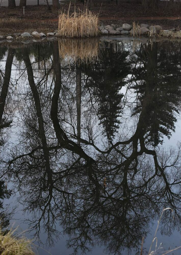 Leo Mol Sculpture Garden's pond reflection just after sunrise. May 1, 2014  (KEN GIGLIOTTI / WINNIPEG FREE PRESS)