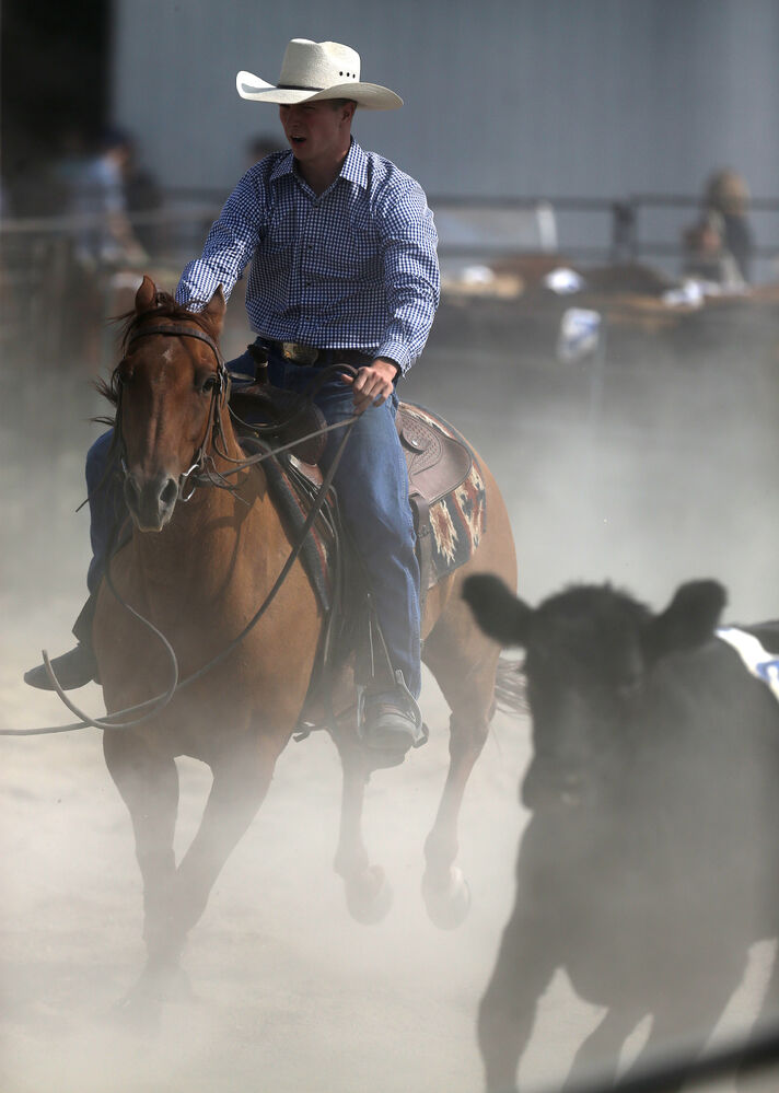 A participant in the penning competition. (Trevor Hagan / Winnipeg Free Press)