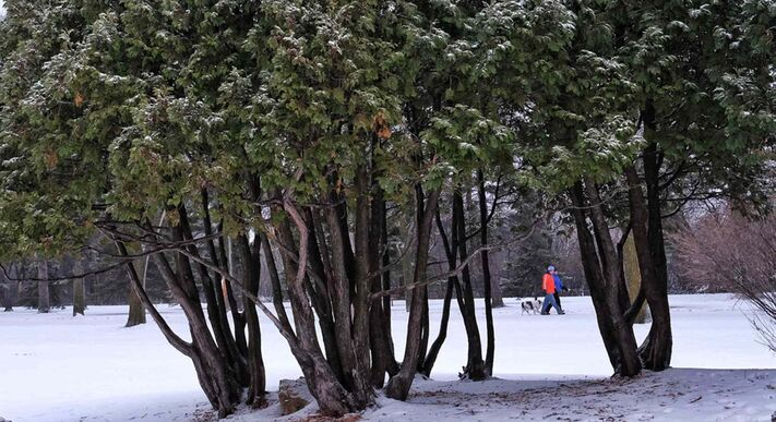 Dog walkers out for a stroll in Assiniboine Park Sunday morning.