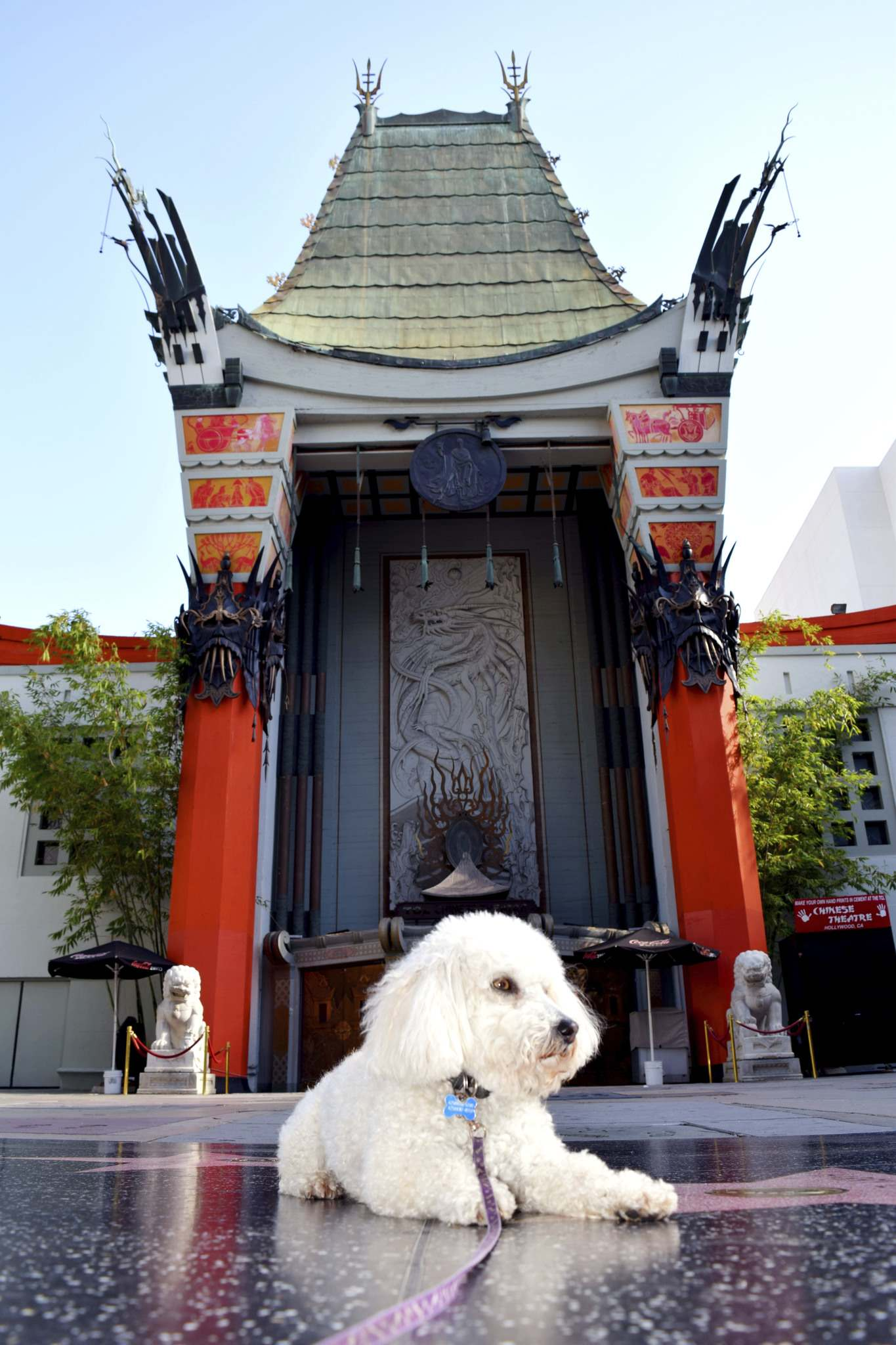 Benji mugs in front of the Chinese Theatre on Hollywood Boulevard.</p>