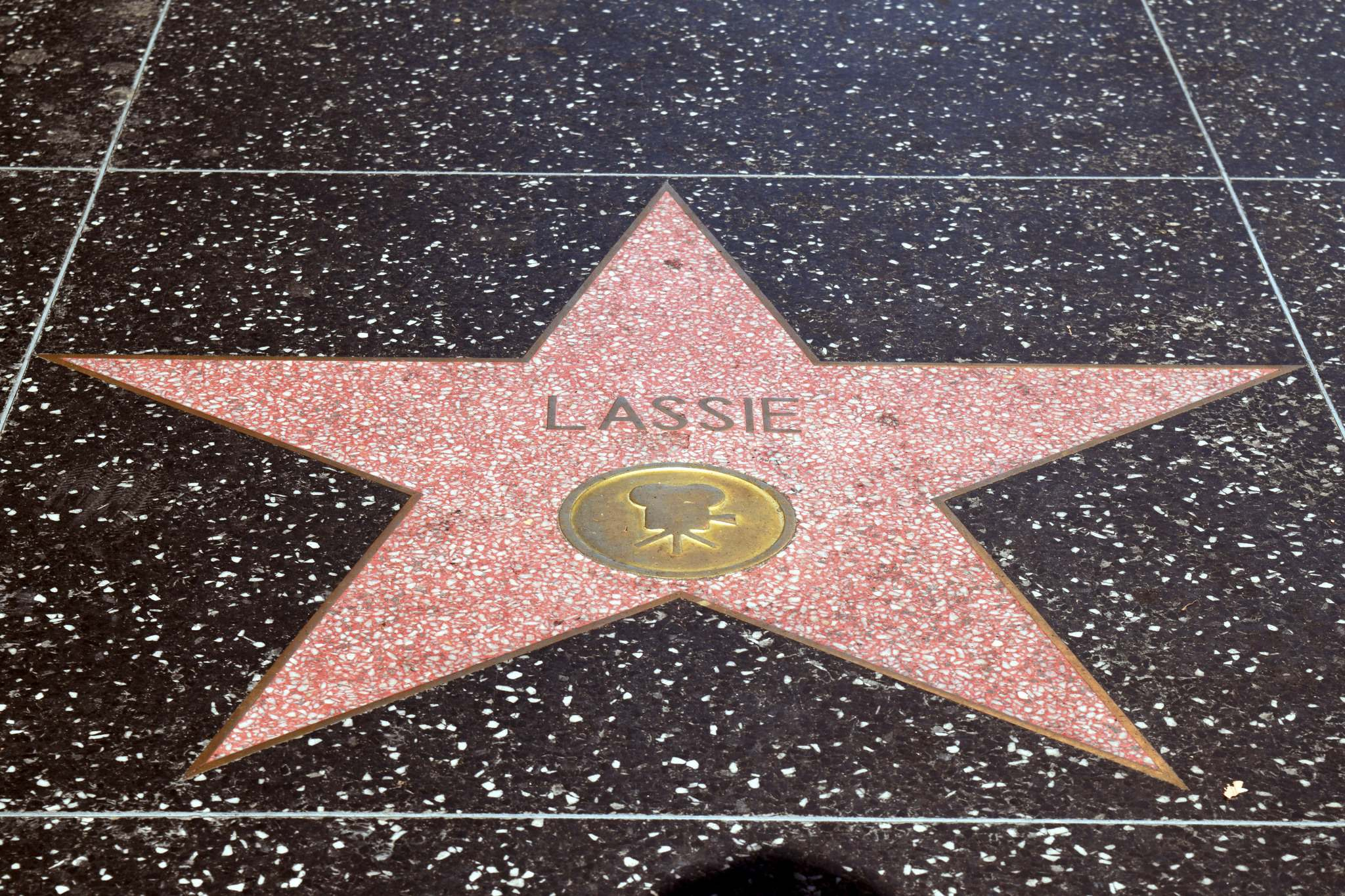 Canine movie and TV actress Lassie's star on the Hollywood Walk of Fame.</p>