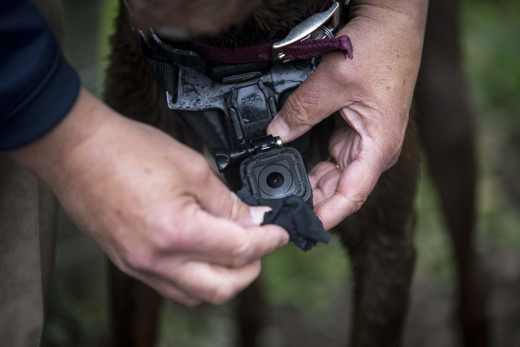 Aaron Lavinsky / Minneapolis Star Tribune </p><p>Ken Kixmoeller wipes off the lens of a GoPro camera mounted to his dog, Tula, as they visit the Battle Creek Off-Leash Dog Park.</p>