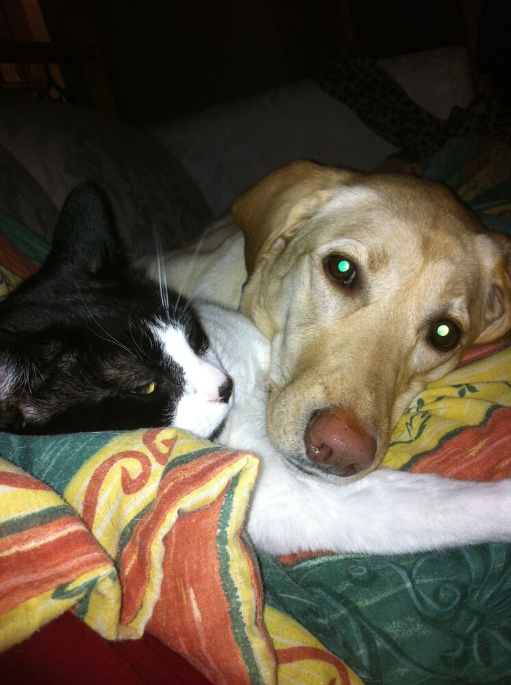 """Meet Muggins, the cat, and his dog-sister, Tanner, a yellow lab-type dog. Tanner is 6 ½ years old and doesn't have much of a weight problem, just five pounds she puts on every winter and loses every summer. (Who can't identify with that?) When she was younger, Tanner packed on a few pounds, but owner Trudy Tuhkanen decided to address that before Tanner started slowing down with age. Good food and runs in the country all summer has kept her weight in check for the last three years. Muggins is another story. He was born on a farm where he spent his kittenhood sleeping in the dog food bag, snacking to his heart's content. Two years ago, he hit 24 lbs. The vet said Muggins' family could help him lose the weight or they could """"love"""" him to death. Switched to an all wet food diet, Muggins lost a lot of weight, but he went back on the dry food and slowly gained it back, weighing in at 18 lbs. in March. He's back on the special wet food now and his weight has dropped to 15 lbs. Trudy is confident Muggins will reach his goal weight, and his family hopes he will live a long, love-filled life. Pet Valu Fit Pet Project (Submitted photo)"""
