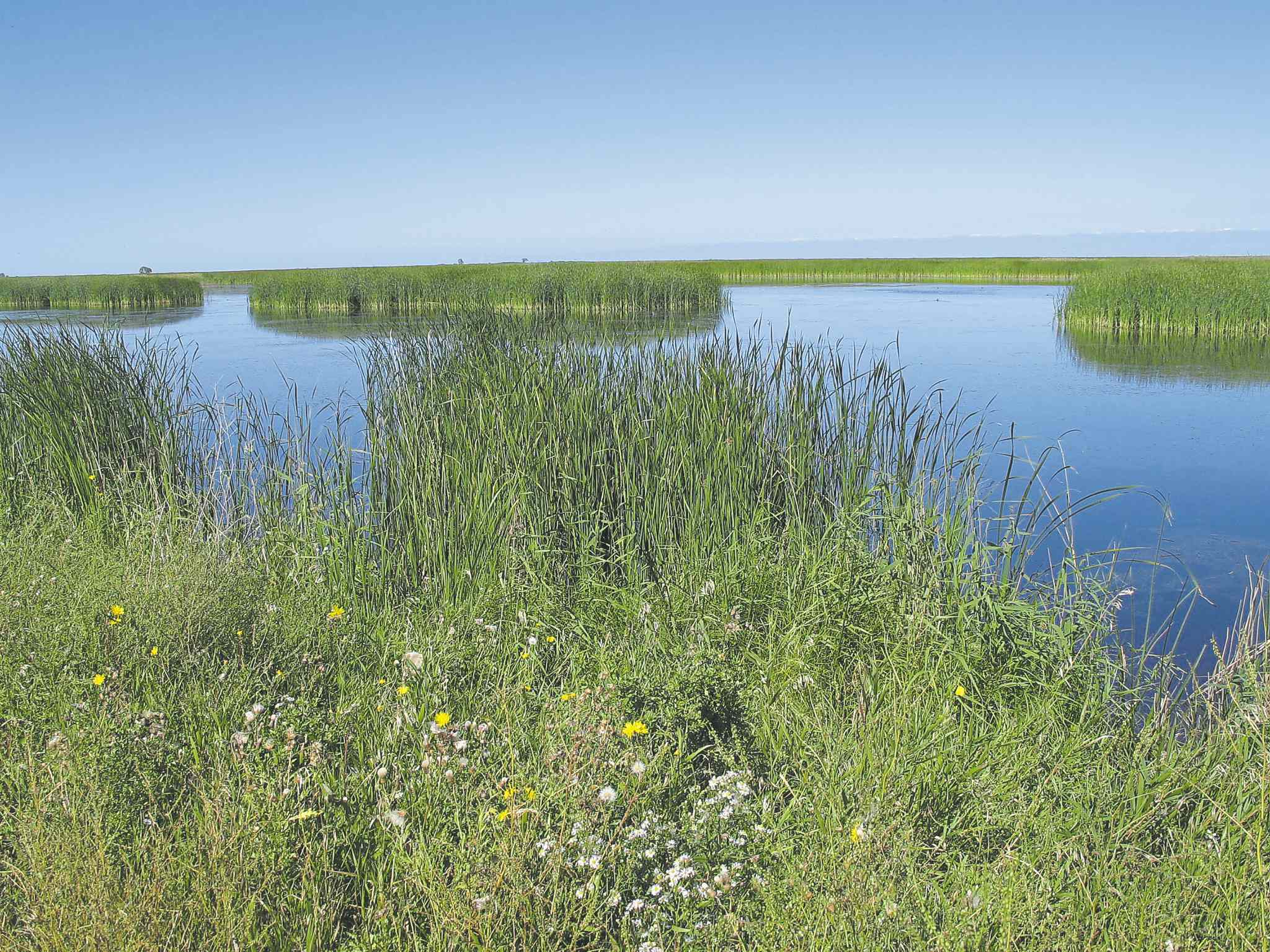 Delta Marsh on the south end of Lake Manitoba