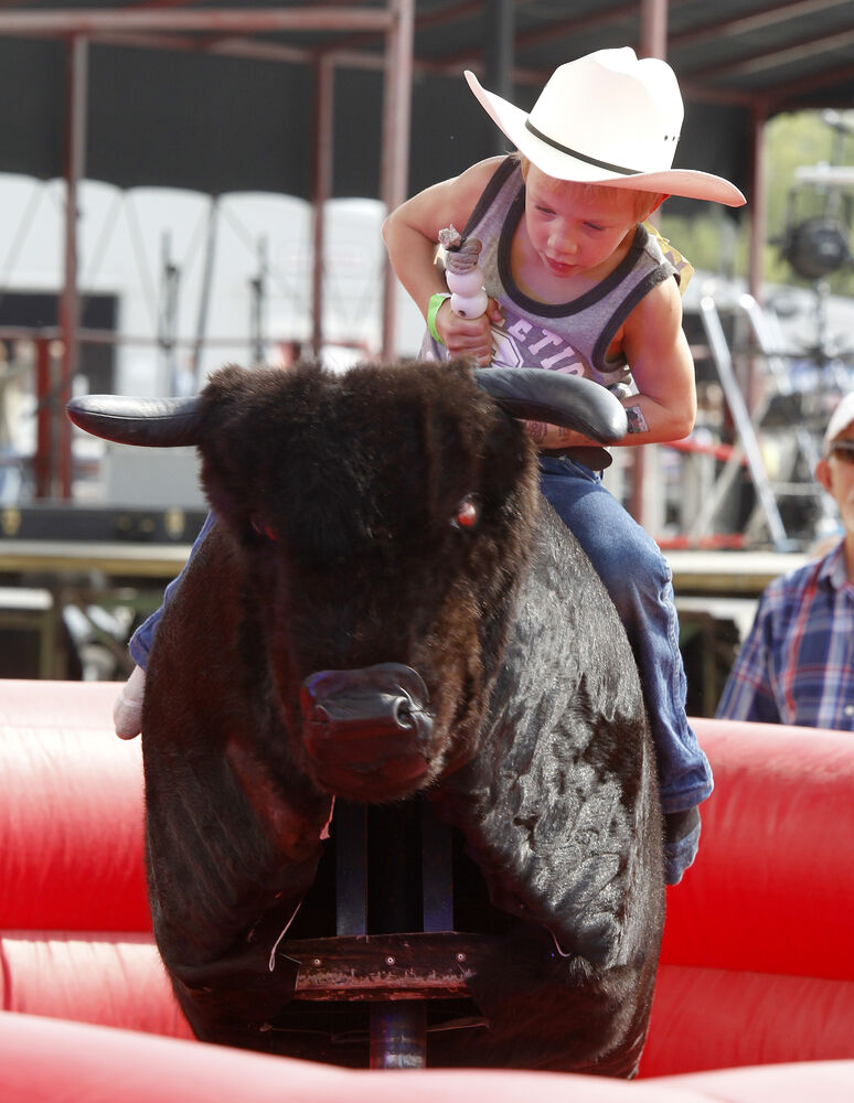 A youngster rides the mechanical bull at the Morris Stampede Saturday. (Trevor Hagan / Winnipeg Free Press)