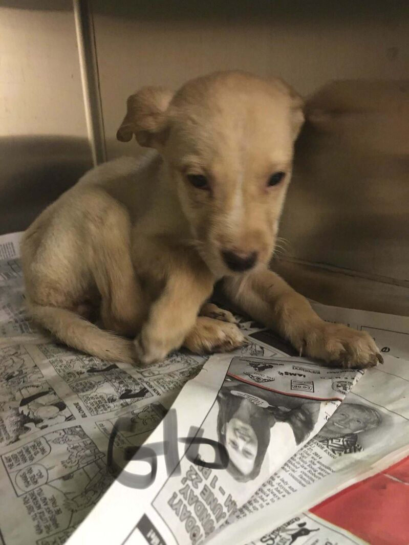One of the 10 puppies found by officers. (Winnipeg Police Service)