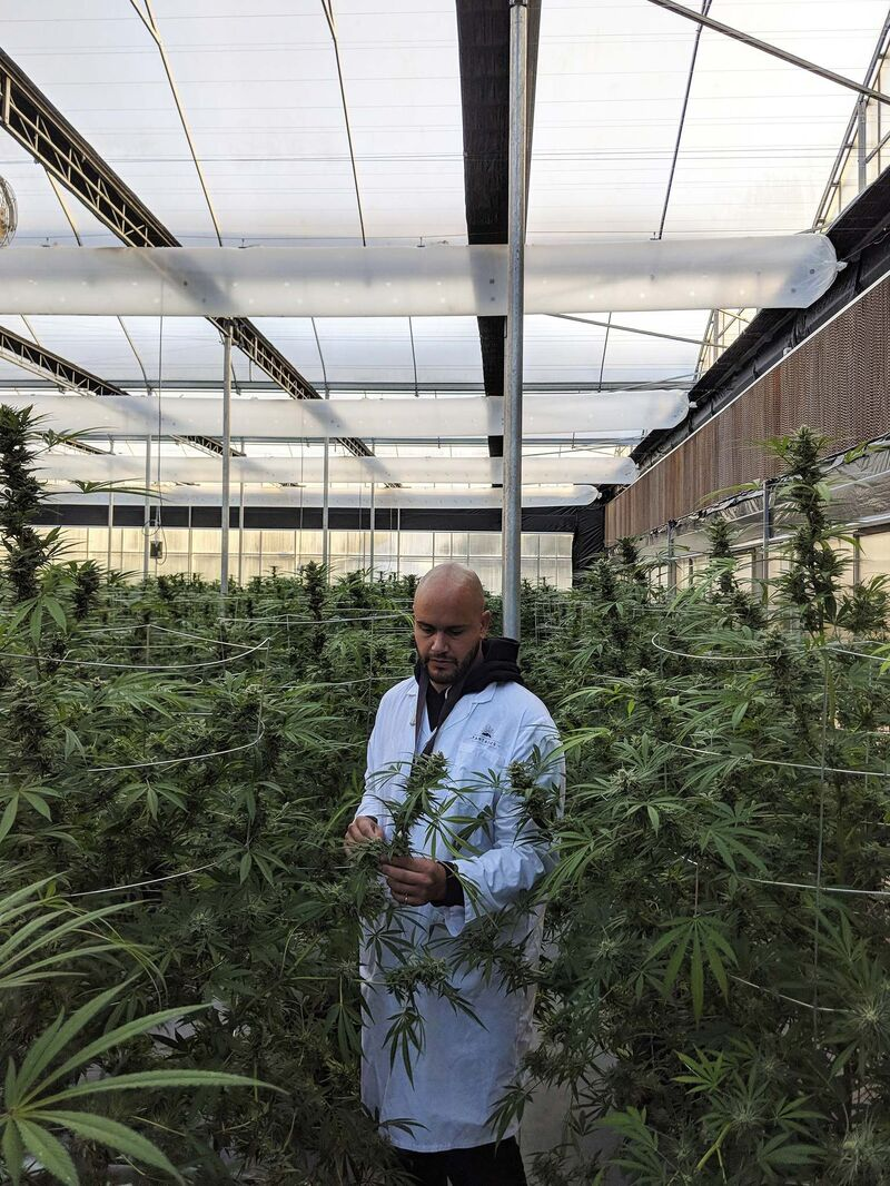 Tantalus Labs CEO Dan Sutton poses in his company's B.C. cannabis production facility. (Supplied)</p>