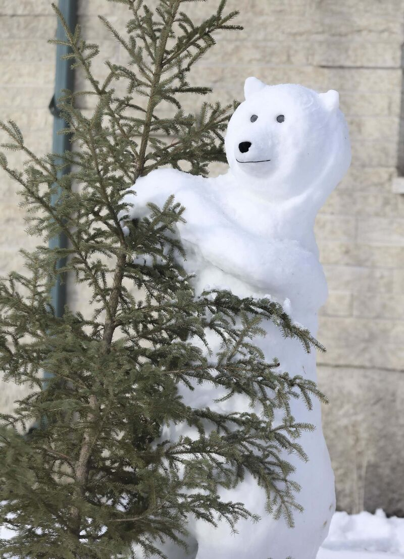 Bennett has sculpted almost a dozen polar bear snow sculptures, which range in size and formation.