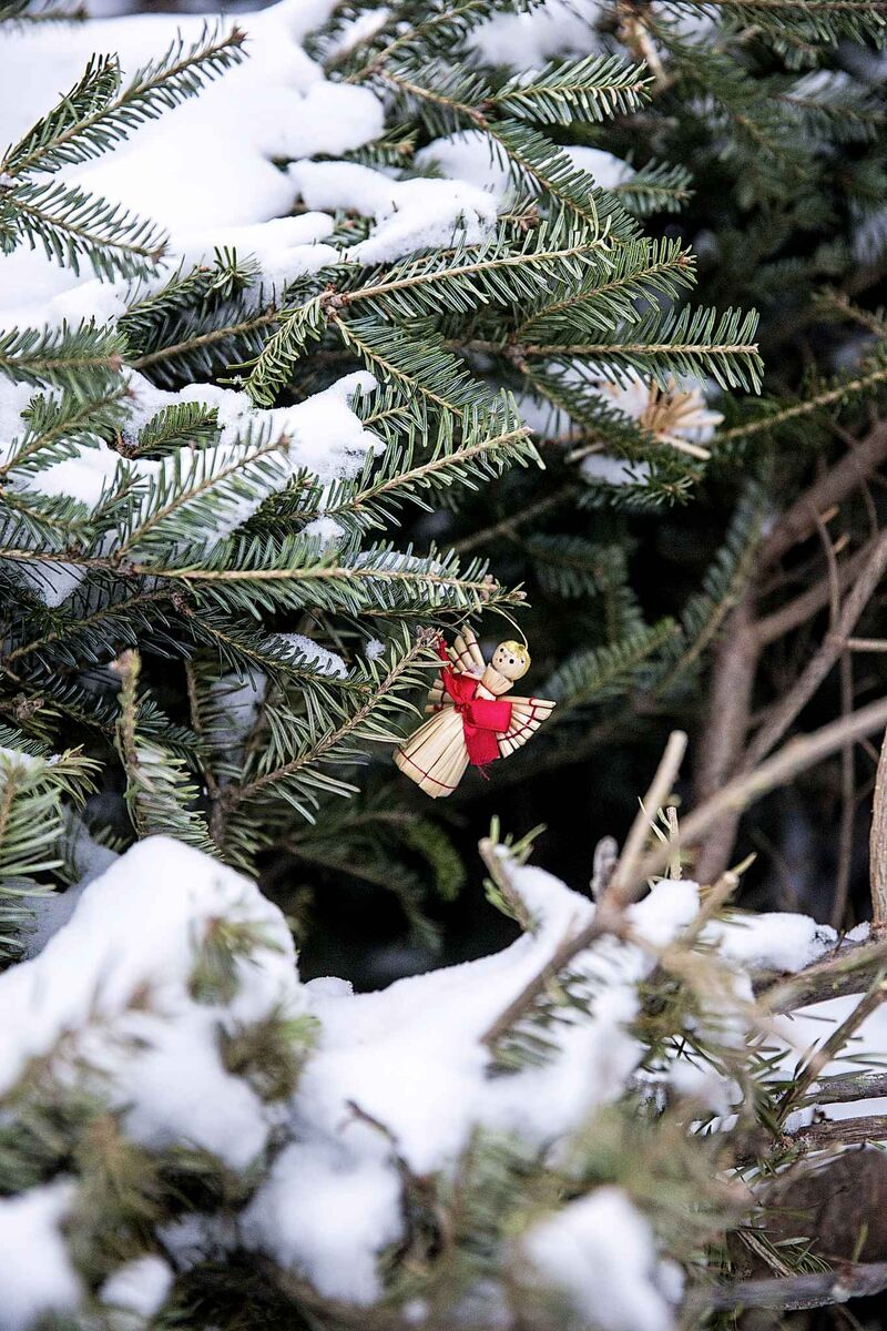 Sometimes, people miss ornaments when they drop off their trees.