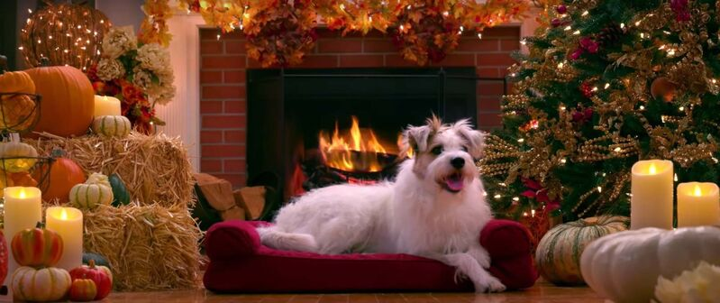 Hallmark's yule log videos feature a variety of animals, including Happy the dog. (YouTube)