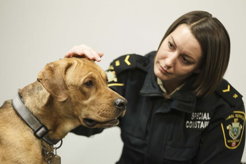 Animal Services Officer 148 with Hope last month after being rescued. (Mike Deal / Free Press files)</p>