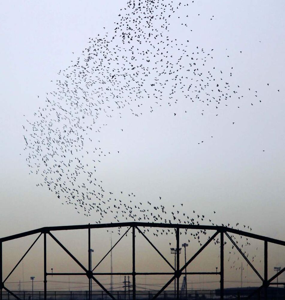 Pigeons Galore- A massive flock of pigeons rises over the Arlington Street bridge. March 28, 2013   (JOE BRYKSA / WINNIPEG FREE PRESS)