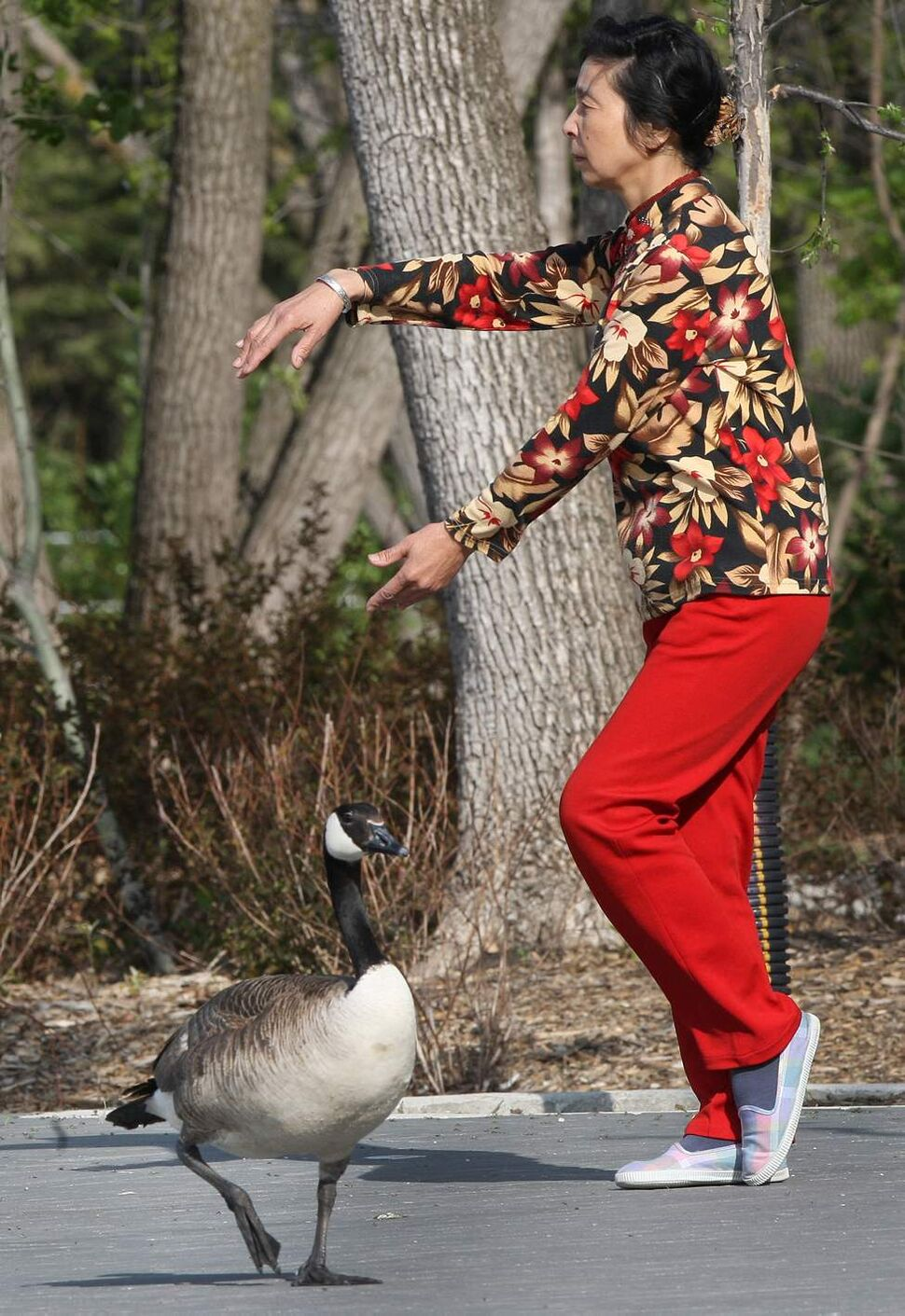 DAY THIRTEEN - Jia Ping Lu practices tai chi at the Assiniboine Park duck pond Thursday morning under the watchful eye of a Canada goose.  May 17, 2012   (JOE BRYKSA / WINNIPEG FREE PRESS)