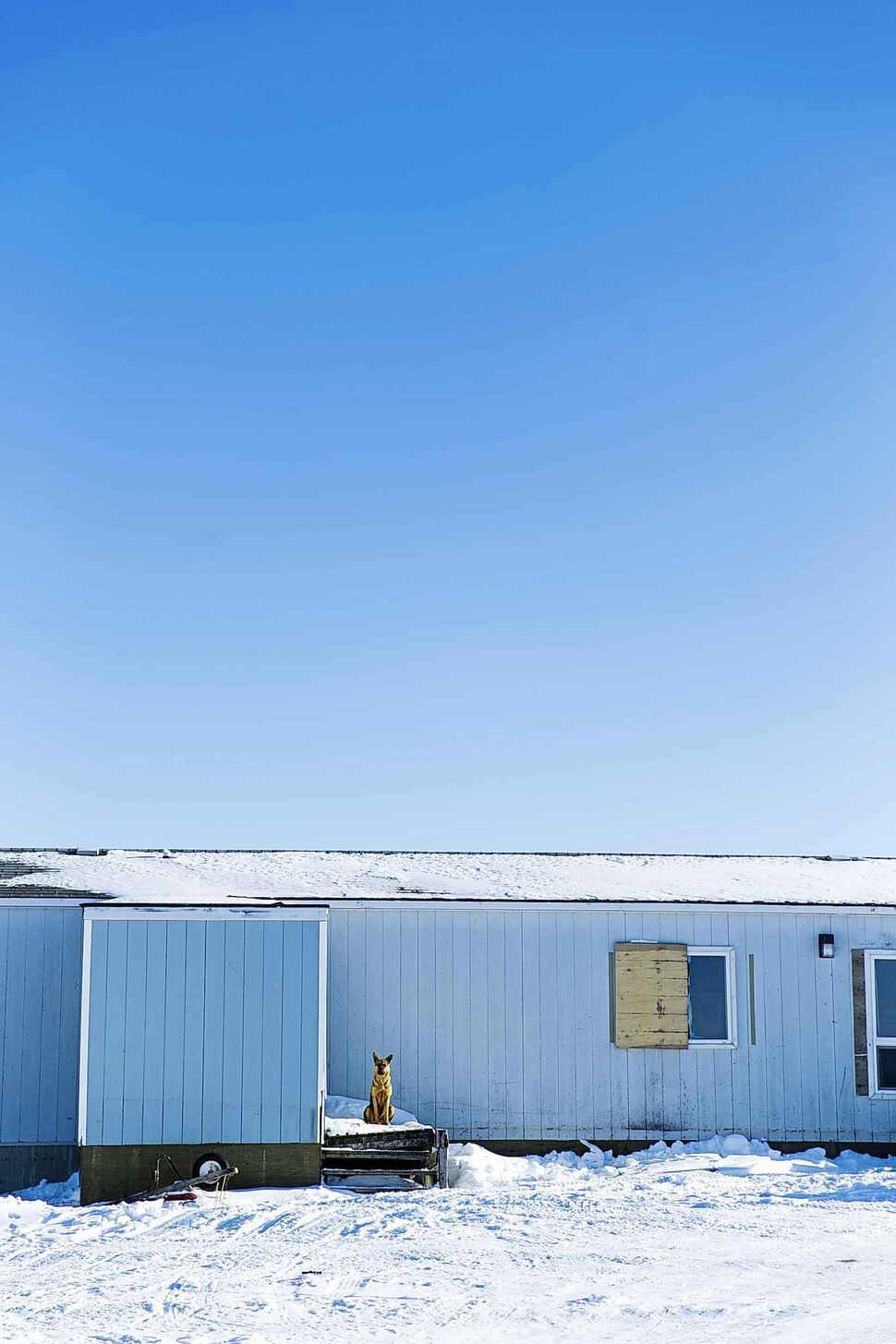 MIKAELA MACKENZIE / WINNIPEG FREE PRESS</p><p>February 23 — A dog stands sentry on the Chemawawin Reserve, Manitoba.</p>
