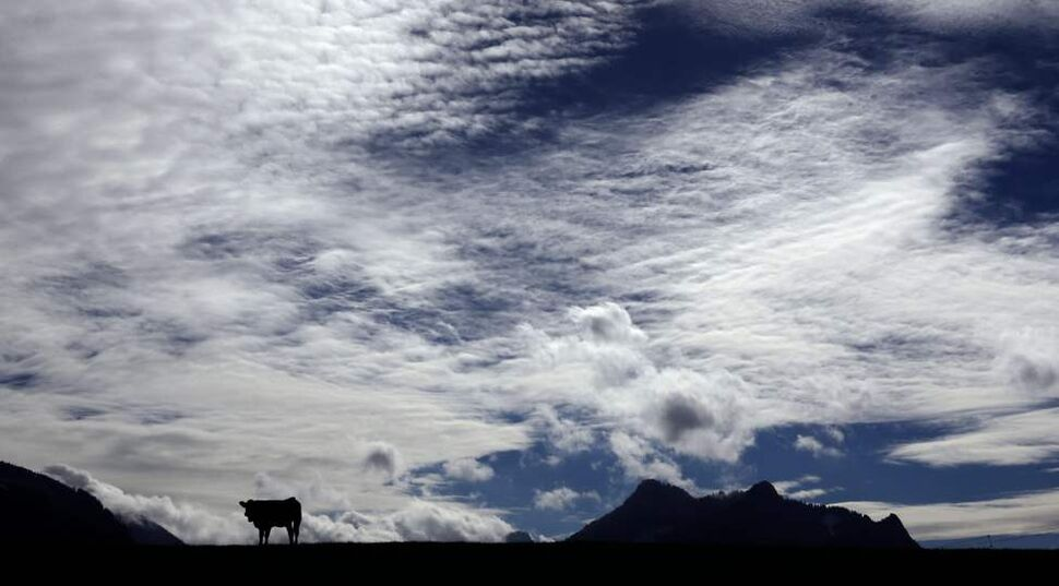 A cow is silhouetted on a meadow in Samerberg near Rosenheim, southern Germany, Tuesday, Oct. 16, 2012. Weather forecast predicts good autumnal weather conditions in Germany for the upcoming days. (AP Photo/Matthias Schrader)