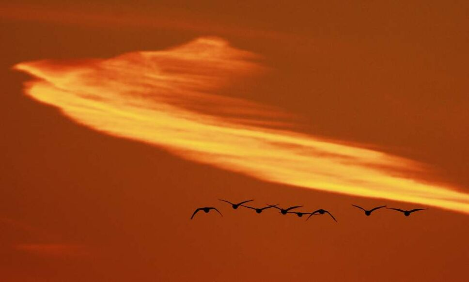Geese flock to Fort Whyte Tuesday afternoon September 25, 2012.  (John Woods / Winnipeg Free Press)