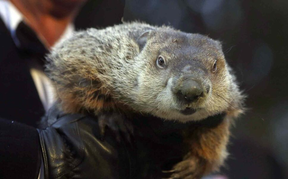 The weather predicting groundhog, Punxsutawney Phil.  (Keith Srakocic / The Associated Press Files)