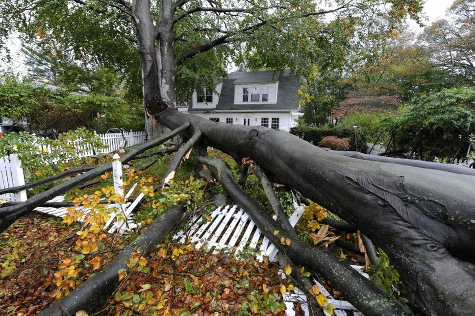A huge tree split apart and fell over the front yard and fence of a home on Tuesday in Sea Cliff, N.Y. (AP Photo/Kathy Kmonicek)