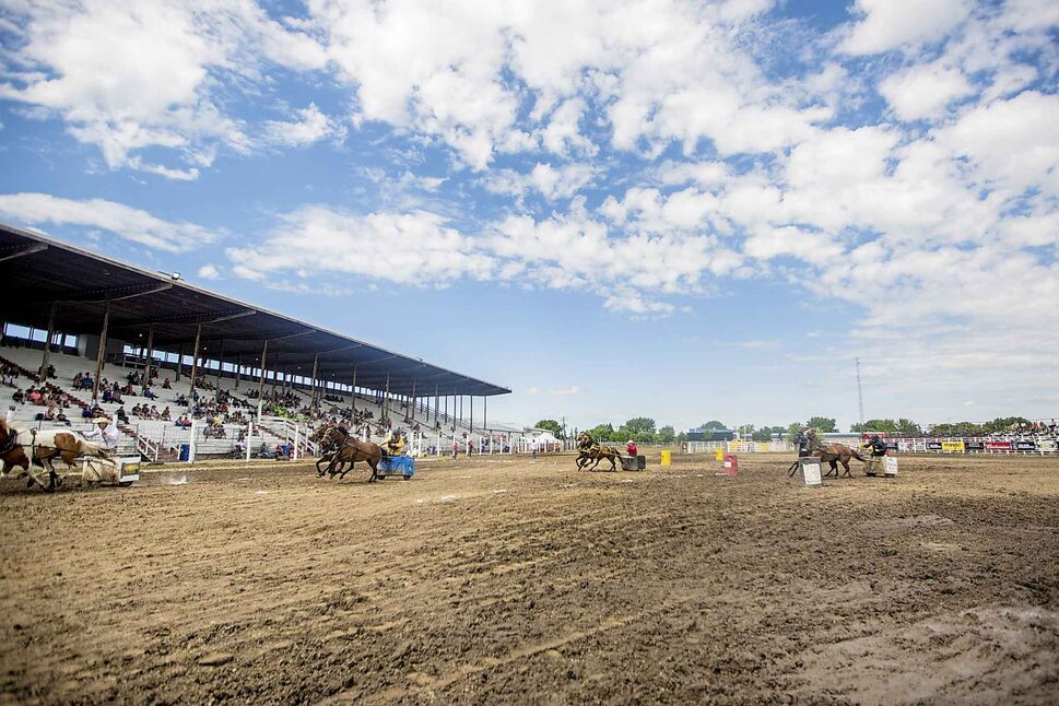 The chariot races at the Manitoba Stampede.
