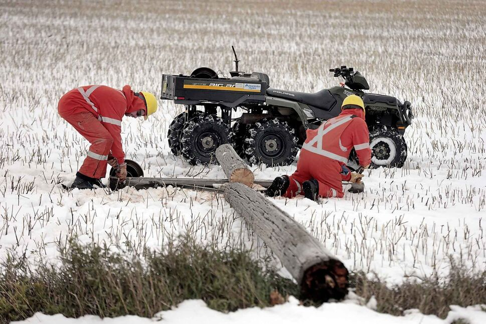 A Manitoba Hydro crew deals with fallen poles while salvaging wire and insulators in a field north of Portage la Prairie on Tuesday. (Phil Hossack / Winnipeg Free Press)