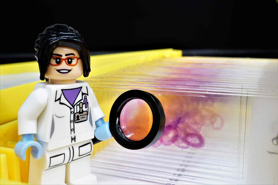 MICRO OR MACRO:  A Lego scientist minifigure stands in front of H&E (hematoxylin and eosin) staining slides for microscopy. Image taken with macro lens. (Yvette Shang)