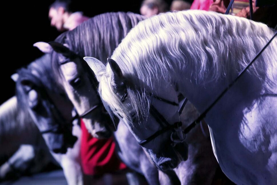 Performers entertain at the Cavalia Odysseo Tuesday. (JOHN WOODS / WINNIPEG FREE PRESS)