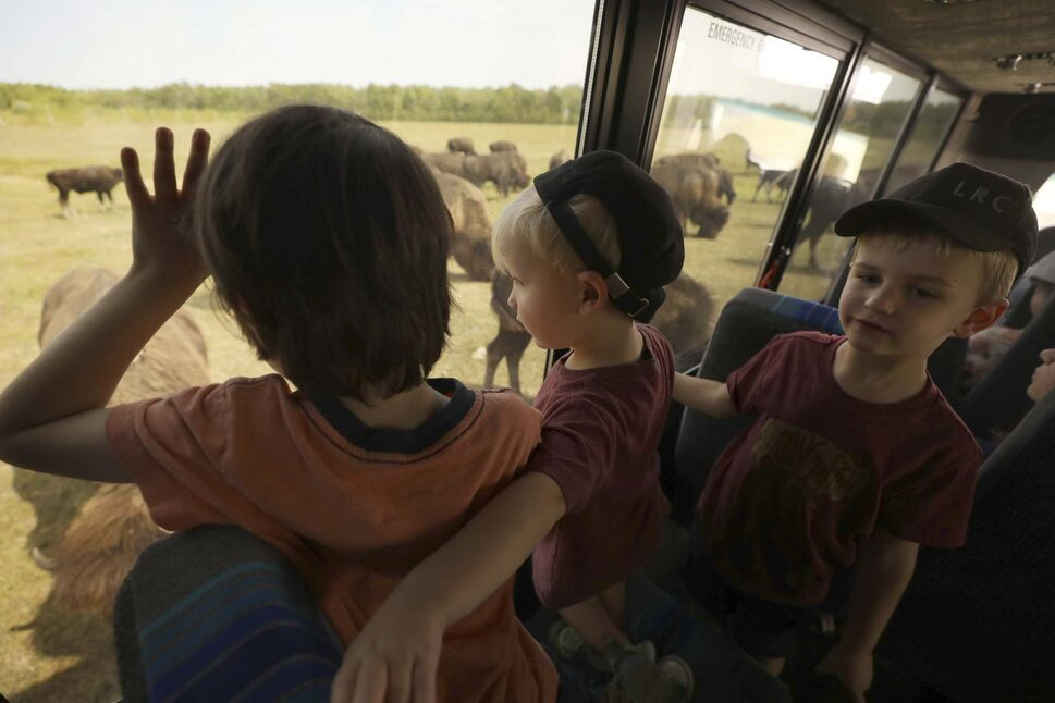 RUTH BONNEVILLE / WINNIPEG FREE PRESS</p><p>Kids peer out the windows at a large herd of bison while on a bison safari recently.</p></p>