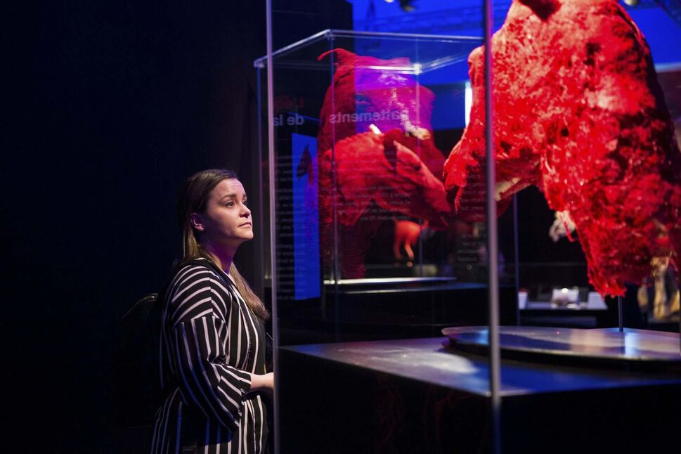 Sarah Ferrari takes a look at the preserved blood vessels of a horse's head.</p>
