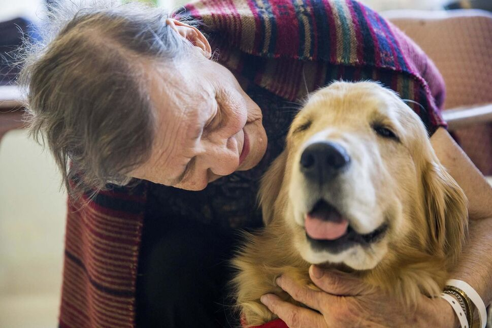 Therapy dog Juno visits Rita Wilkins at the Misercordia in Winnipeg on Thursday. (MIKAELA MACKENZIE / WINNIPEG FREE PRESS</p>)