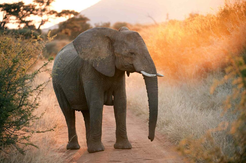 18 All elephants (Proboscides). (South African Tourism / MCT)