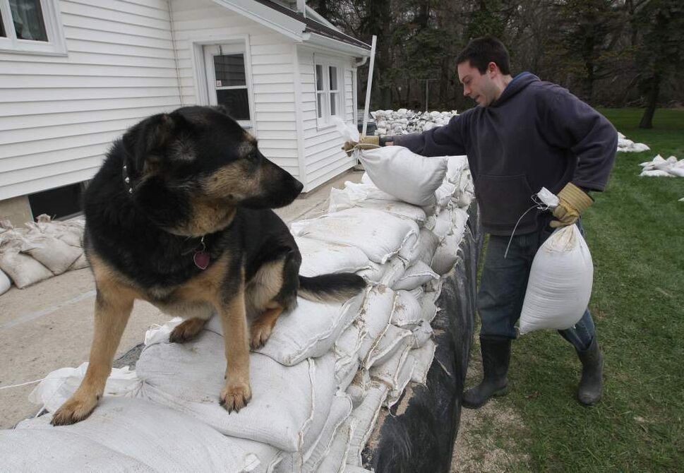 John Bray  does  last minitute sandbagging to his fathers home near Oakville, Manitoba Thursday morning as his dog Lucky keeps a eye-Their home is next to the Elm River.  May 12, 2011. (Joe Bryksa / Winnipeg Free Press)