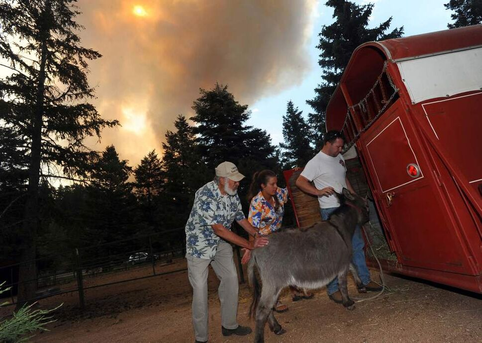 Karen Bodine, center, and her husband, Greg Bodine, right, help her father, Duane Schormann, load his animals into the trailer Sunday, June 24, 2012, as the Waldo Canyon Fire burns toward Cascade, Colorado, and the family home she grew up in. (Christian Murdock/Colorado Springs Gazette/MCT)