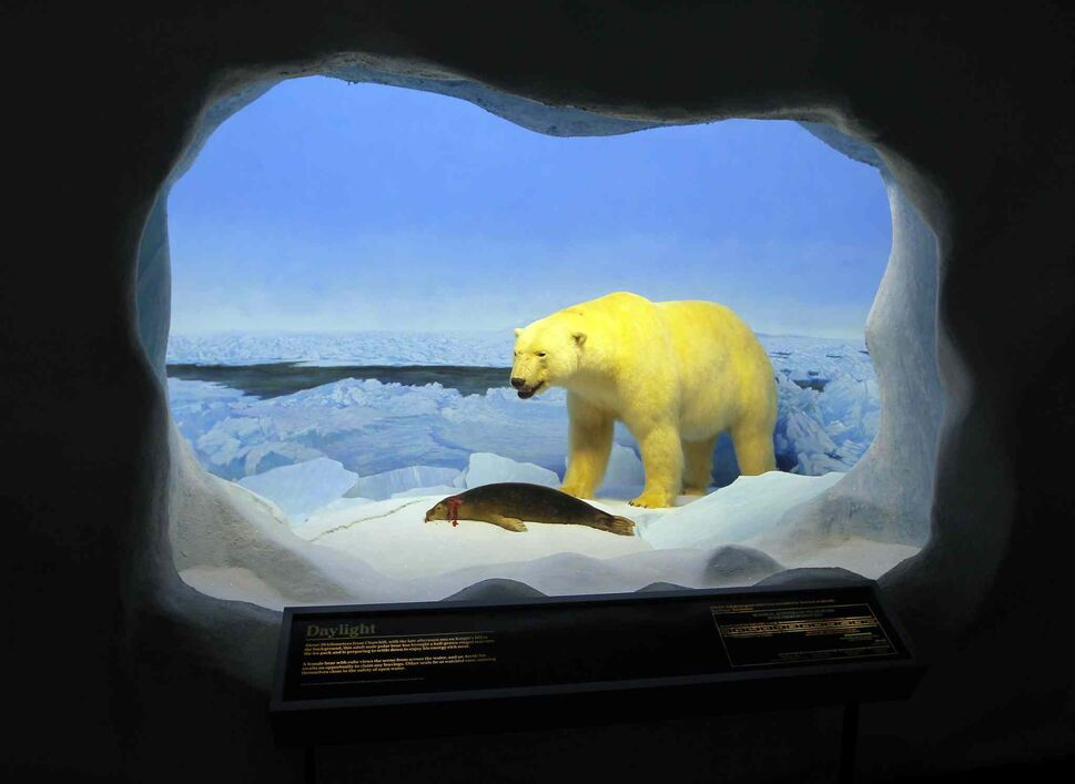 The Manitoba Museum. Manitoba's diverse wildlife is showcased in this section of the museum. Real stuffed animals. BORIS MINKEVICH/WINNIPEG FREE PRESS