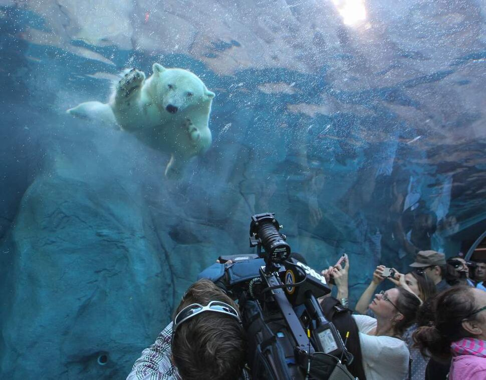 The grand opening of the Assiniboine Park Zoo exhibit Journey to Churchill was a new experience for many Winnipeggers as well as the polar bears who were introduced to their new home only hours earlier.  July 03, 2014  (MIKE DEAL / WINNIPEG FREE PRESS)