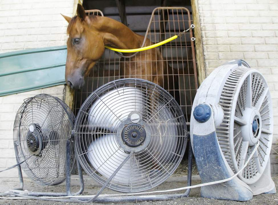 Fans keep one of owner Jonathan Sheppard's horses cool in the stables at Colonial Downs in New Kent County, Va.. (AP Photo/Richmond Times-Dispatch, Alexa Welch Edlund)
