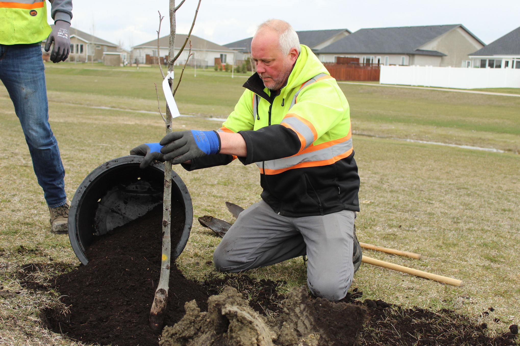 Chris Freund, arborist for the City of Steinbach, plants a Dropmore linden in Grandview Park, a green space that runs along a drainage canal on the city's south end. Tree plantings in the area began last fall but were curtailed by the Thanksgiving snowstorm.