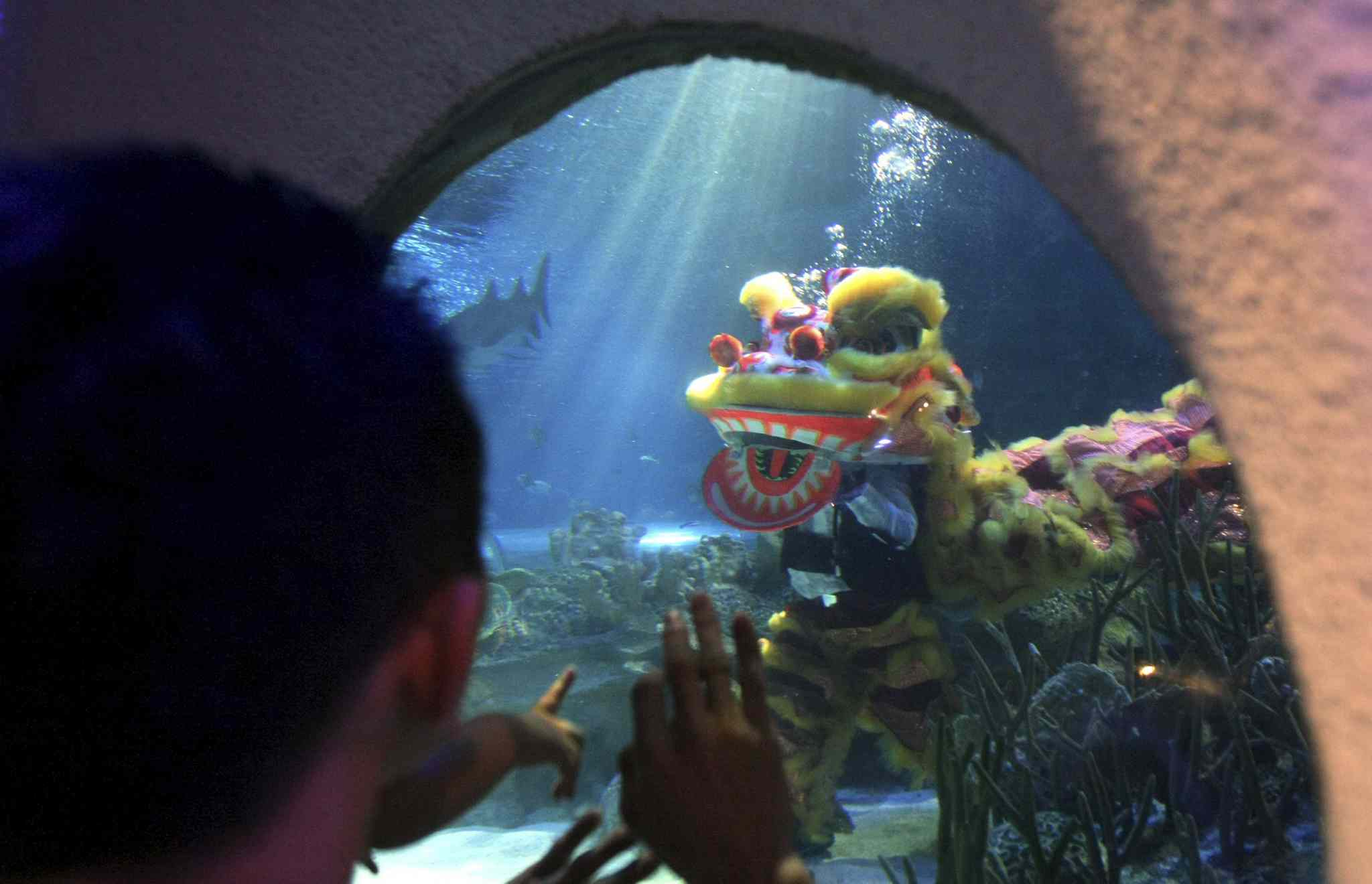 Two divers perform the underwater Chinese lion dance in front of visitors on the first day of Chinese New Year celebrations at Aquaria KLCC underwater park in Kuala Lumpur, Malaysia on Friday.
