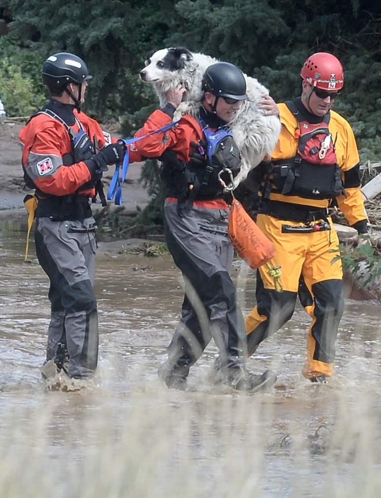 Colin Dinsmore, of Summit County Rescue, center, carries a dog on his shoulder after rescuing three people, five dogs and two cats from a flooded home, Friday in Boulder, Colo.  (JEREMY PAPASSO / The Associated Press)