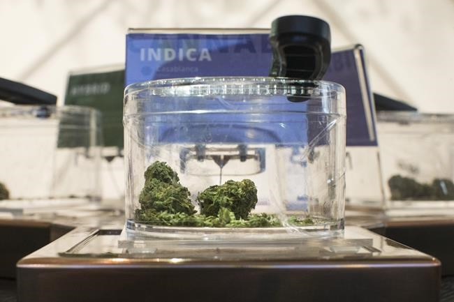 Cannabis is shown in a display jar on the first morning of opening for a Toronto retail store licensed to sell Cannabis in Ontario, on Monday, April 1, 2019. THE CANADIAN PRESS/Chris Young