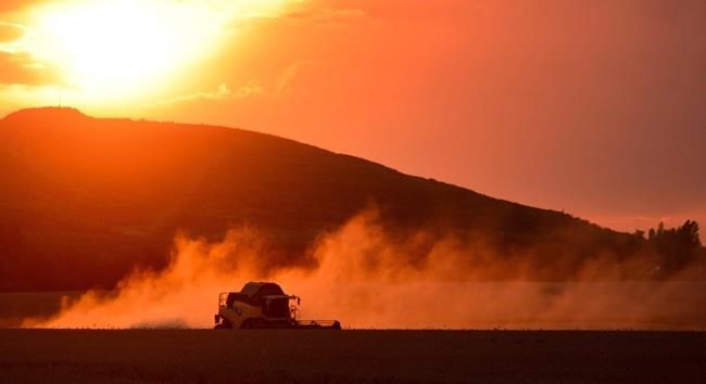 A farmer harvests wheat with a combine harvester against the light of the setting sun near Sehnde, Germany, August 11, 2014. Climate change could open a whole new Canadian farming frontier, says newly published research. THE CANADIAN PRESS/AP Photo/dpa, Julian Stratenschulte
